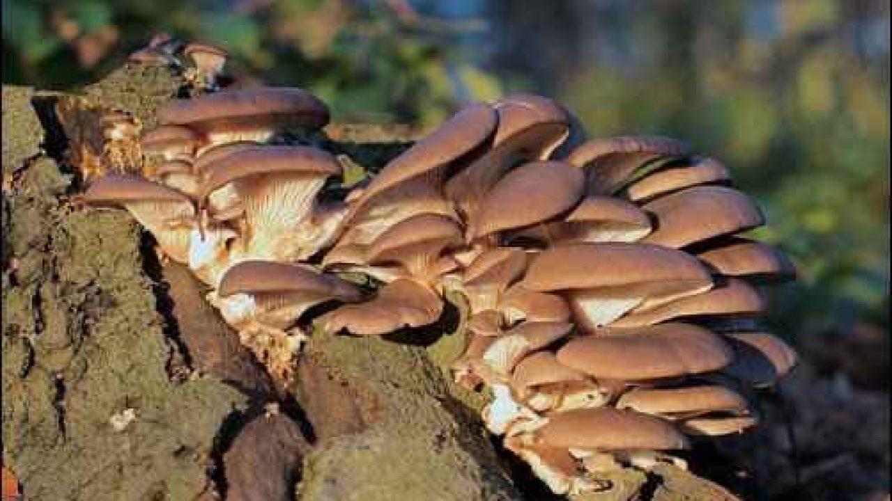 The Magical World of Mycelium - Homestead org