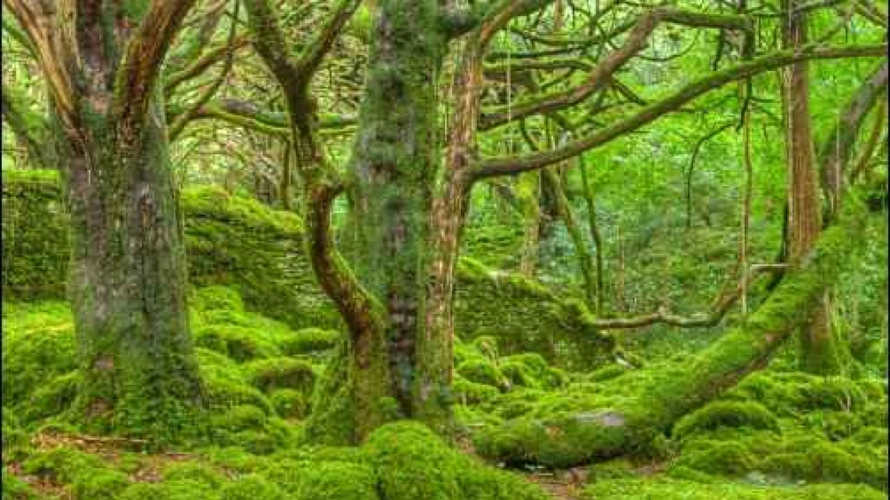 Grow And Sell Moss For Beauty And Profit At Homestead Org