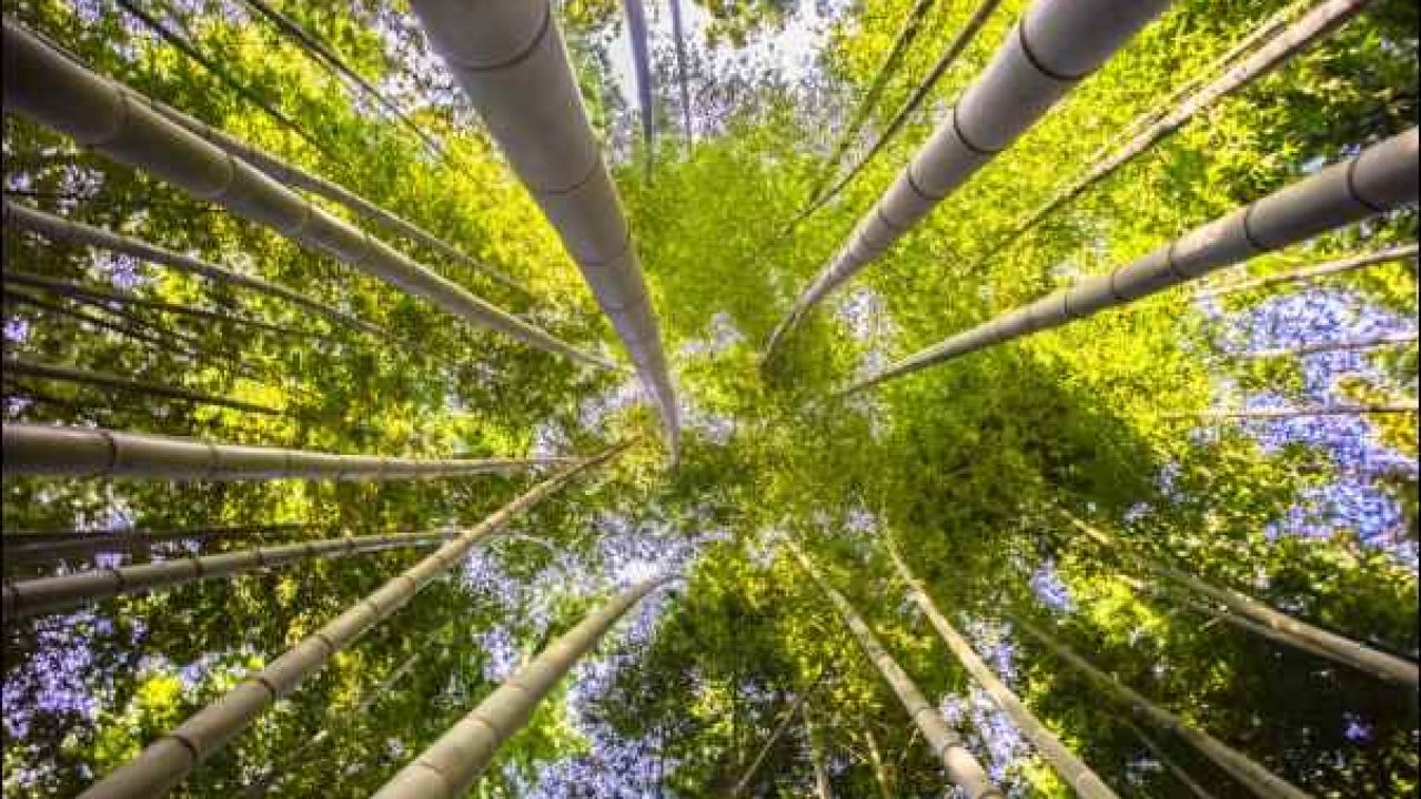 Best Of Bamboo Bamboo Projects For Your Home And Garden Decor Ideas
